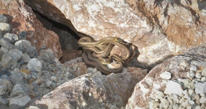 Profesörden yılanlardan korunma yöntemleri